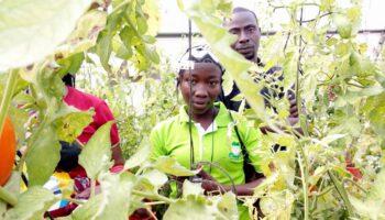 Gana-agricultura-sostenible